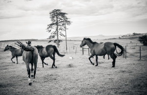 KZN Horse Photography